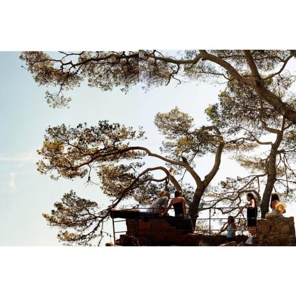 arbre-Dypt_Tossa_de_mar_Aout_2015_7258_6 copie